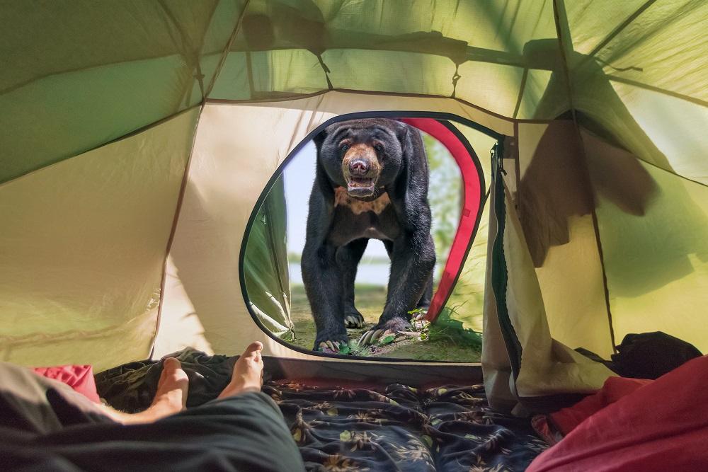 Bear near the tourist tent